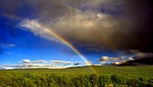 rainbow-forest