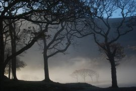 lost-in-the-mist
