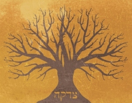 tzedakah-taking-root