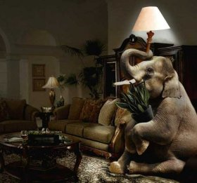 elephant-in-the-living-room
