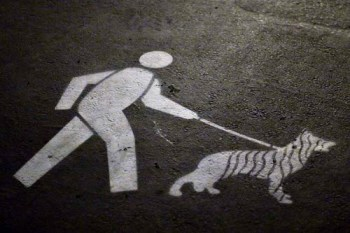 dogma-on-a-leash