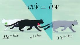 quantum-physics-cat