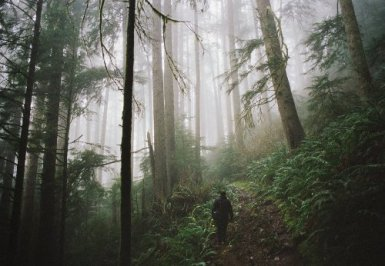 when-the-forest-beckons